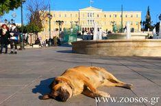 Εγκρίθηκαν 600.000 ευρώ σε φορείς της Τοπικής Αυτοδιοίκησης για τη διαχείριση αδέσποτων ζώων