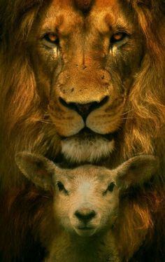 The Lion and the Lamb. Jesus came as the lamb of God. Jesus' coming will be a lion in revelation Lion And Lamb, Prophetic Art, King Of Kings, Christian Art, Christian Quotes, Holy Spirit, Lions, Christianity, Creatures