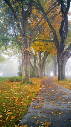 Autumn Path Through the Fog - A path covered in autumn leaves leads between the trees and the fog on Vancouver Island.