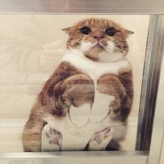 下から撮った動物の画像ください : ハムスター速報