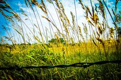 Art Print: Barb Wire by Hannah (my 11 year old daughter), Farm in Kansas looking beyond the fence into the fields