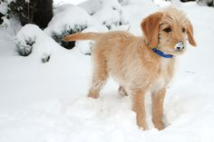 Someone loves playing in the snow...