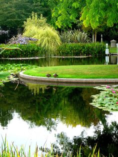 Ngatea Water Garden, NZ, via Fathimath Shiyama, flickr