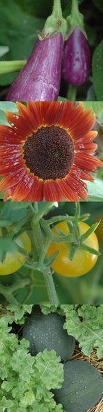 Mother Earth Vegetable Garden Planner--I love this program!