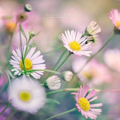 E Flowers, Amsterdam, Instagram Posts, Artist, Plants, Photography, Inspiration, Biblical Inspiration, Photograph