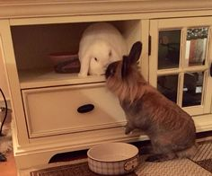 Thihihihhihi... kisses from The Bunny Brothers in Norway :) Duncan and Dexter on D&D by Inger Johanne :)