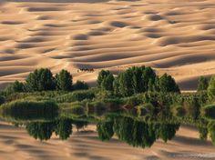 Deserto e oásis