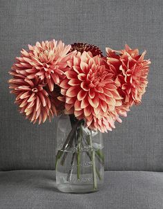 Love these Dahlias, maybe cream ones too?