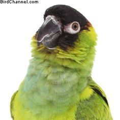 Have a biting or screaming pet bird? Try these training tips to help calm your pet bird.