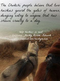 Wonderful All About The Siberian Husky Ideas. Prodigious All About The Siberian Husky Ideas. Cute Husky, My Husky, Husky Puppy, Husky Quotes, Dog Quotes, Husky Humor, Dog Poems, Animal Quotes, Siberian Husky Funny