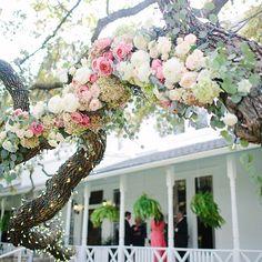 Magnolia Merryweather