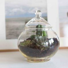 How to create a nice terrarium in 4 steps. So simple and so decorative! Post in french and english