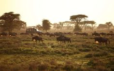 &Beyond African Safari trip: maybe someday!