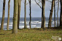 Fotorelacja Pogodowa / fot. Michał Kozłowski Baltic Sea, Plants, Plant, Planets
