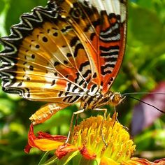 Happy Monday everyone have a pretty pic of a butterfly. My favourite subject :)  #cambodia #travel #DH