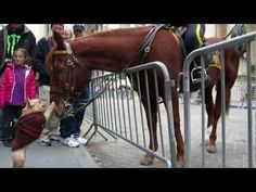 Adorable Frenchie Plays With NYPD Horse!…this is so you….must be one of your relatives in NYC!!