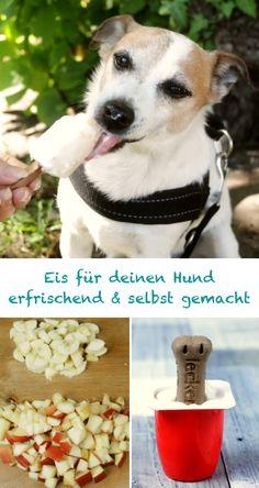 Eis für deinen Hund - Sommer Idee - So gönnst du auch deiner Fellnase eine wohlverdiente, leckere Abkühlung. Wau!