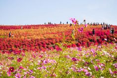 Info Wisata di Ibaraki Ibaraki, Japan Travel, The Good Place, Places, Lugares