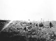This Florida Memory photograph shows land being cleared in the Crestview area. It was taken in July 1919.