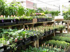 Fresh spring herbs!  4/17/15