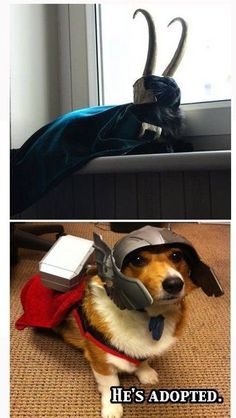 ehehehe, almost couldn't decide if this belonged on the cats & dogs or Avengers board