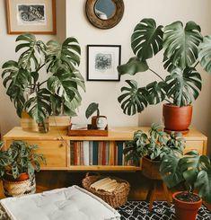 Plant Art, Plant Decor, Cheese Plant, Boho Room, Interior Plants, Plant Illustration, Mid Century Design, Home Decor Inspiration, Houseplants