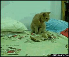 Funny Avenge Me Cat Animated Gif | Funny Joke Pictures