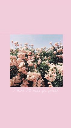 biklicdila d i l a pink aestheric wallpaper