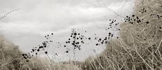 Winter+Walk+Chorus+giclee+photo+print+by+88editions+on+Etsy,+$75.00