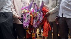 According to a local Hindu belief, the marriage of donkeys speeds up the arrival of monsoon rains