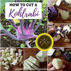 There are so many great Kohlrabi Recipes! Here are some yummy Kohlrabi Recipes that you might not have tried yet. Kohlrabi Recipes, Endive Recipes, Mackerel Recipes, Veggie Recipes, Gourmet Recipes, Healthy Recipes, Talipia Recipes, Surimi Recipes, Dried Vegetables