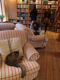 Cat hanging at a bookstore in The town of books, Hay on Wye, Wales, U.K.