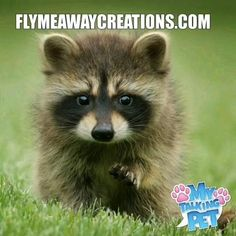 Flymeawaycreations.com Animals And Pets, Baby Animals, Funny Animals, Cute Animals, Wild Animals, Tier Wallpaper, Animal Wallpaper, Cute Animal Videos, Cute Animal Pictures