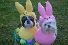 Custom Made Easter Candy dog costume for by sewdoggonecreative