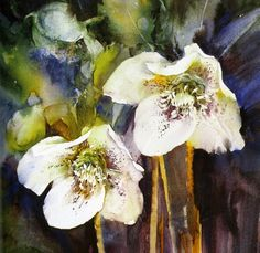 Hellebores by Ann Blockley