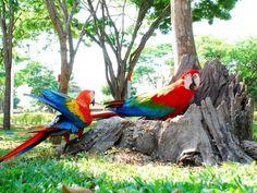 Sinop, Mato Grosso Parrot, Bird, Animals, City, Parrot Bird, Animales, Animaux, Birds, Parrots