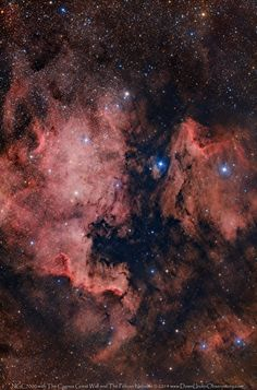 The North American, Cygnus Wall and Pelican Nebulae