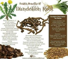 The first chakra deals with issues about surviving on the planet in a physical body. One of our lessons is how to remain consciously connected to our soul and spirit while taking care of our body. For some of us it is hard to stay anchored or grounded. Dandelion root is an abundant herb that can help us to be more consciously connected to our bodies so that we can align with synchronicity and manifest our soul purpose (in5d.com)