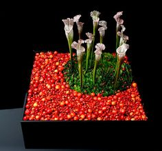 Omotesando Hills Exhibition, '10', October 2008 - Nicolai Bergmann Flowers & Design