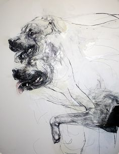 Douglas Miller // dog, drawing, contemporary, absurd, detailed, graphic