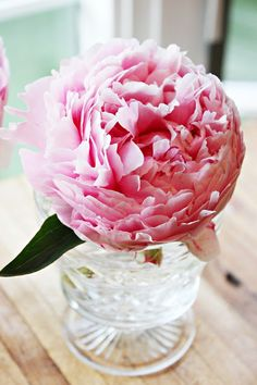 Happy At Home: First Peony Clippings
