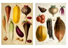 """From Taschen Books """"The Vegetable Garden"""" Late 1800's Parisian Seed Company Illustrations"""