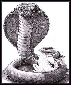 """as shrewd as snakes and as innocent as doves"" Matthew 10:16"