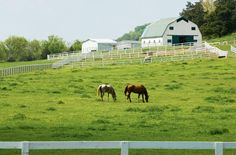 Franklin, Tennessee - picturesque farms with beautiful horses! Looks like a great place for a wedding, right?
