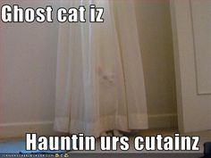 Funny pics of ghost    funny-pictures-a-ghost-cat-is-haunting-your-curtains