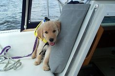 Perfect boat dog!