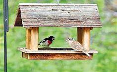 Resultado de imagen de comederos para fotografia de aves