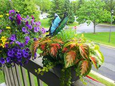 My Butterfly Garden