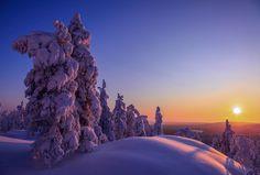 Frosty night in Finland ... by Valtteri Mulkahainen  El #árbol es una maravilla de la naturaleza - #tree #arbre