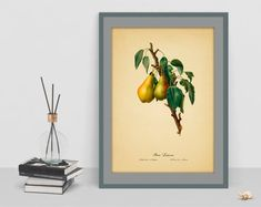 Watercolor vintage Pear art poster picture antique home botanical wall art living room image wall print cubicle decor drawing watercolor art Living Room Images, Botanical Wall Art, Poster Pictures, Cubicle, Wall Prints, Watercolor Art, Pear, Antiques, Drawings